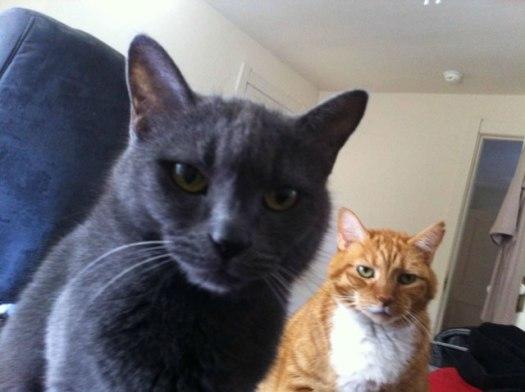 scheming cats