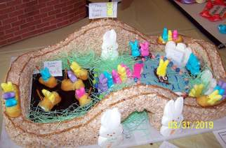 Bunny Park by Girl Scout Troop 60569 (V. Elder 2019)